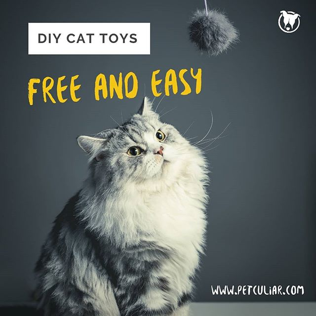 This is the most truthful post though.  Link to blog in bio. It's our latest post!  #diy #diypet #cattoys #petparents #moneymoves #diysuccess