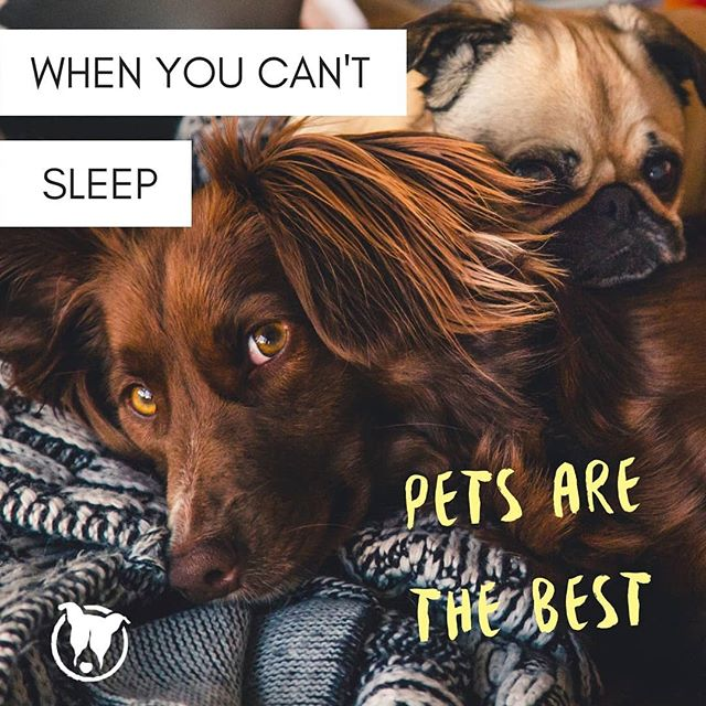 Sleep is a gift for humans. Pets are literally the best when we struggle to sleep. They're always willing to hang out with you at ANY hour. Really take a second to realize how special that is.  #insomnia #activeimagination #sleepproblems #petparent #petculiar #curiousaboutpets #bestfuriends #sleepstudy #sleepy