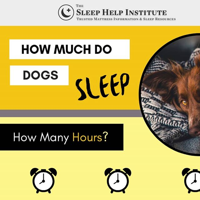 We're partnering with the Sleep Help Institute to learn more about sleep for dogs. 🐕😴 Take a sneak peak at the infographic we're building. 💩🖕 More to come!  #infographic #graphicdesign #staytuned #doglife #sleepingpuppy #seniordog