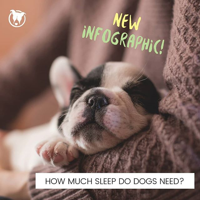 It's here! New and #FREE #petinfographic is up on our site. Learn more about your dog's sleep needs. Link is in bio!  #dogssleeping #seniordogs #doghealth #puppysleep #petparent #petreprenuer #curiousaboutpets #infographic #peteducation #sleephelpinstitute