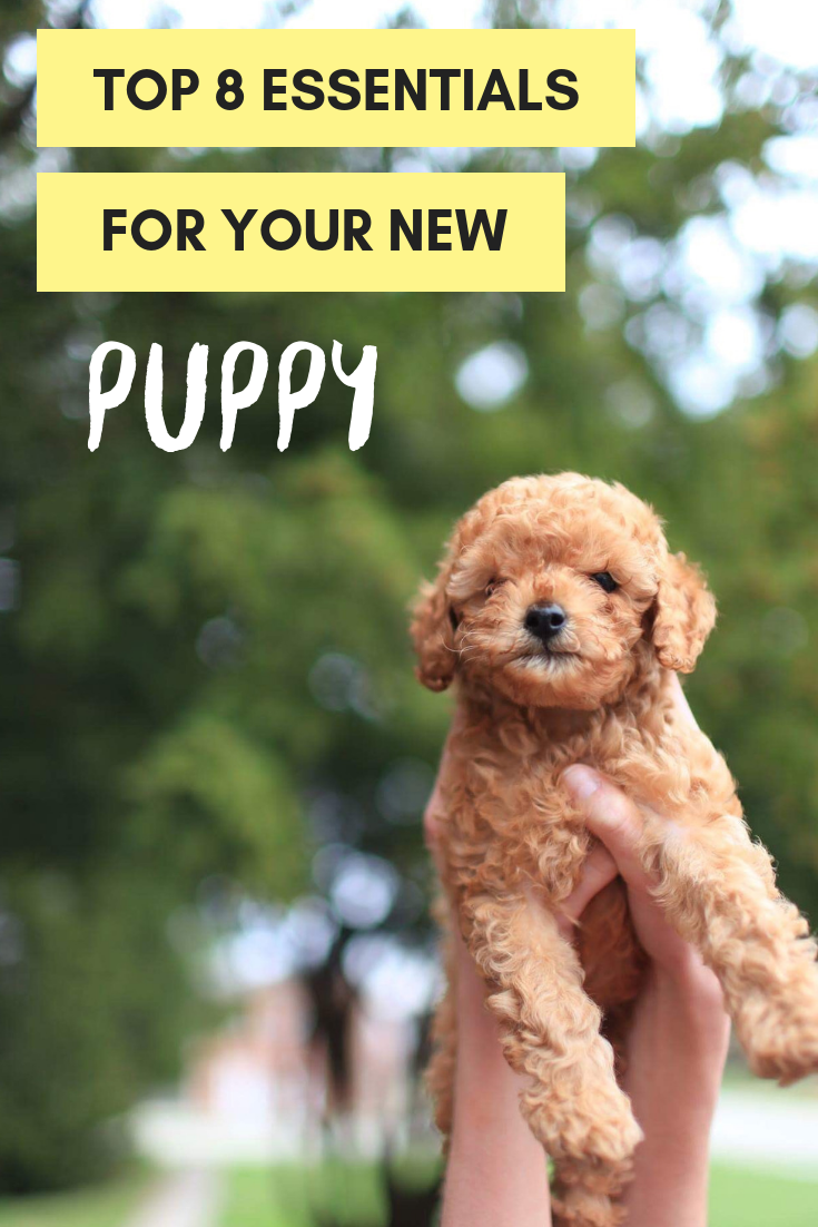 top 8 essentials for your new puppy. Petculiar. Champion for pets. Pet blog. Lifestyle for pets