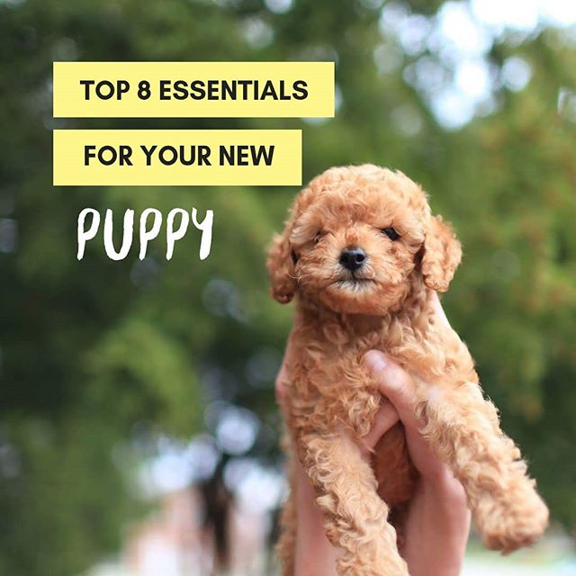 New blog post alert! Link in bio, check our Lifestyle and Culture section. #puppies #puppyessentials #petblog