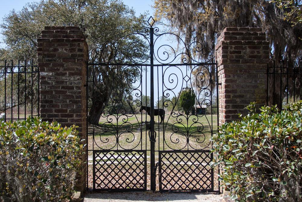 Arcadia - gate and horse.jpg