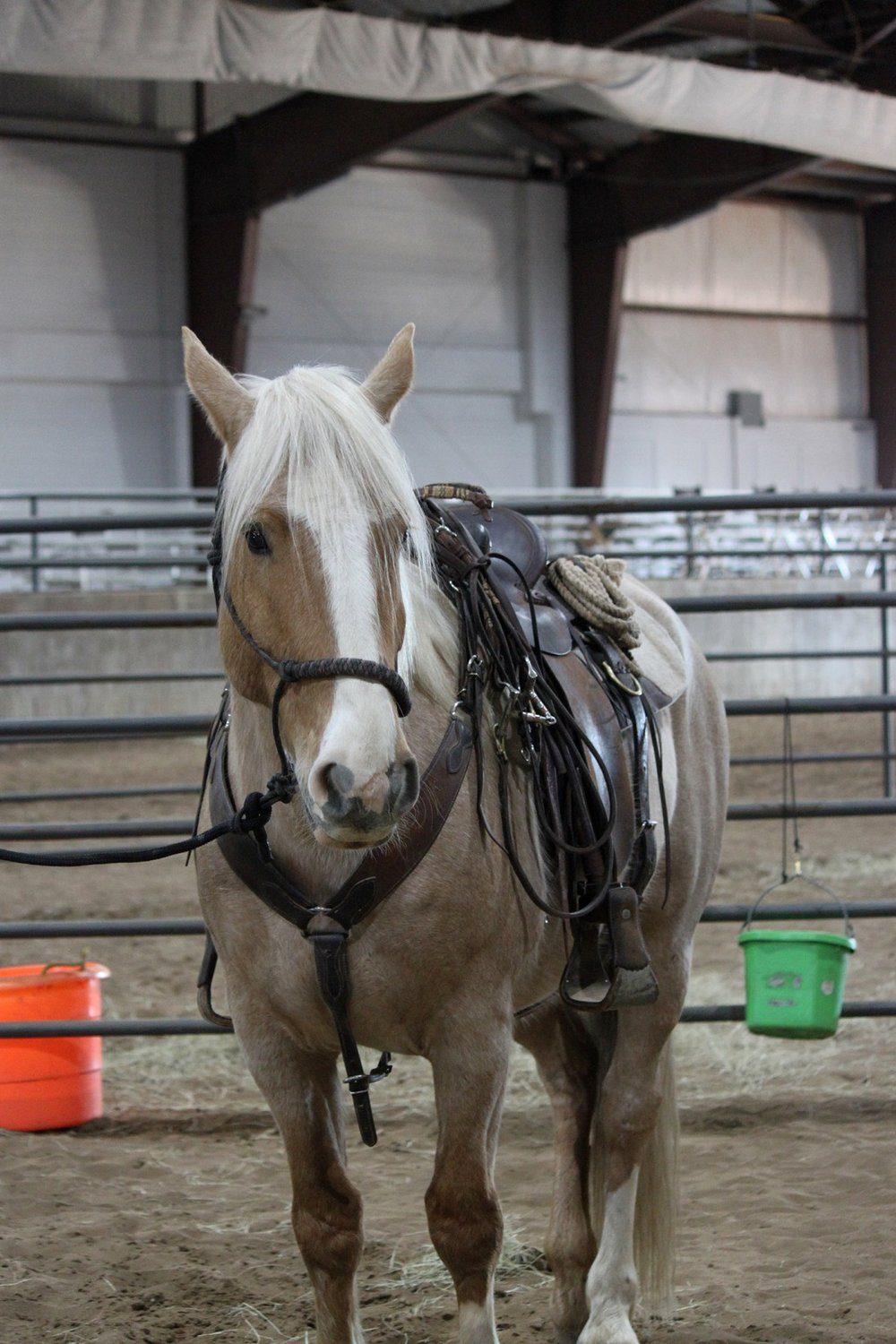 This beautiful palomino gelding was the only horse ready for saddling at the Batesville event.  He was not available for adoption.