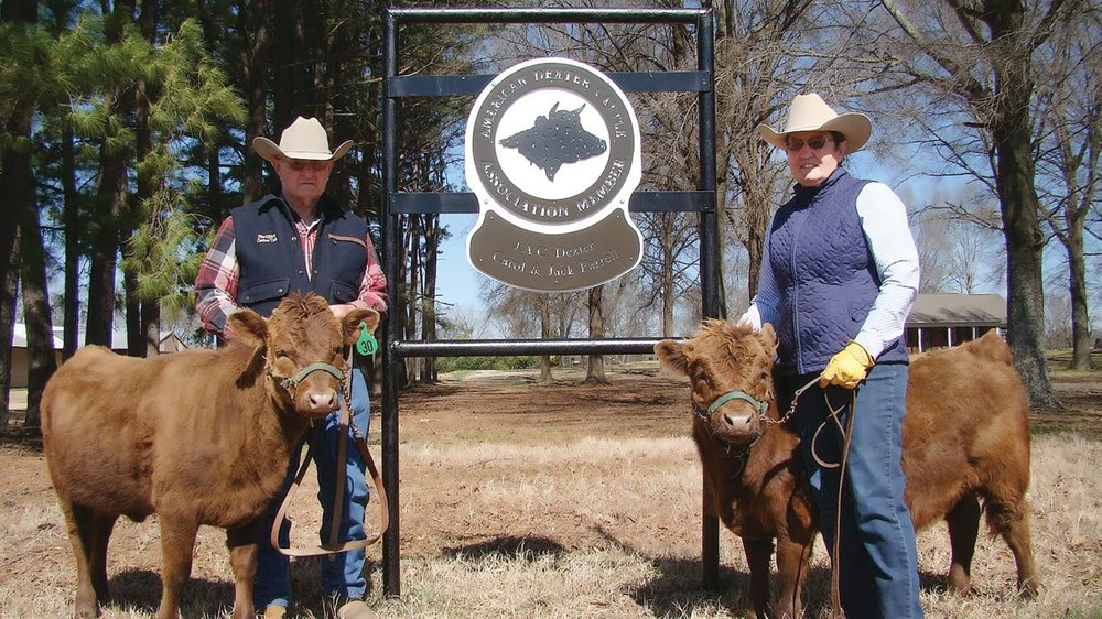 Jack and Carol Farrell are registered breeders of American Dexter Cattle.