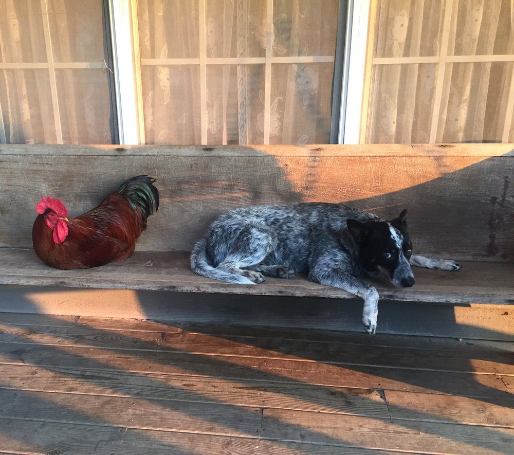 A typical day at the Brownlee's home in Tate County, Miss. Photo by Jodie Brownlee