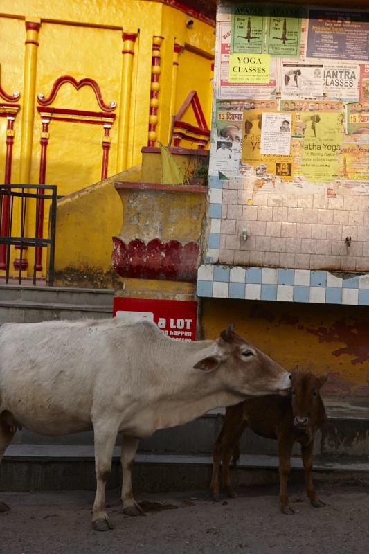 Rishikesh_India 2013_190.jpg