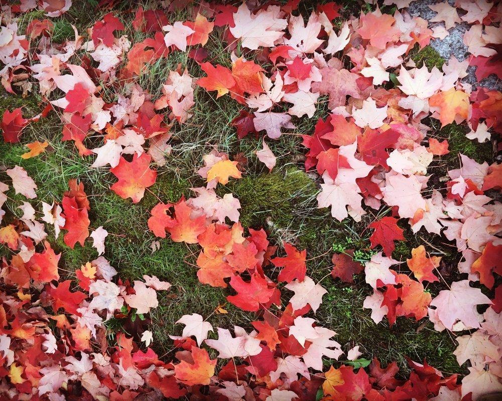 autumn leaves 2017