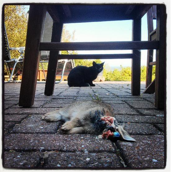 Cats Eats Rabbit OMFG