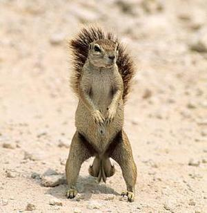 squirrel_nuts_1