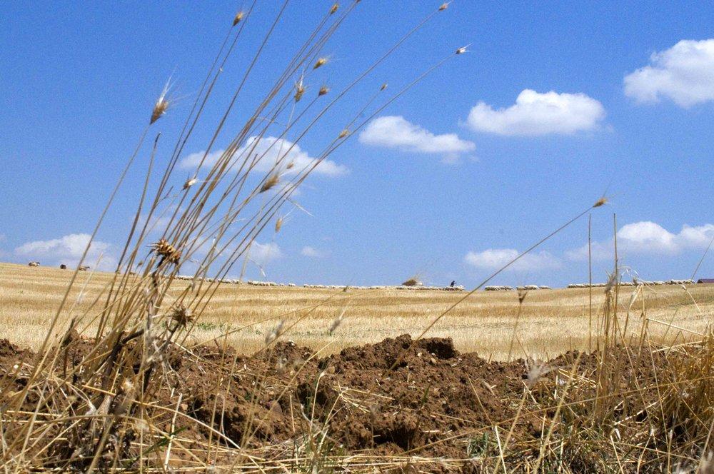 Landscape copy.jpg
