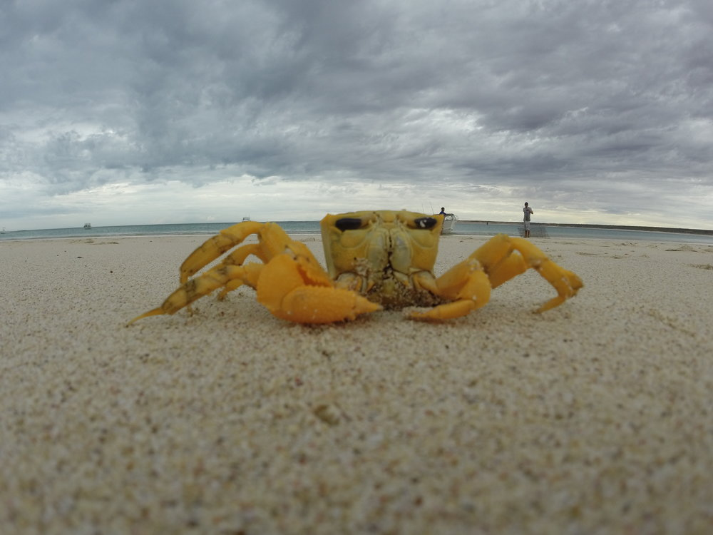Curious Gnaraloo local getting up close to the GoPro