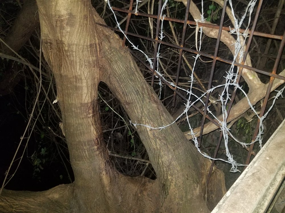 Barbed wire hole in tree Poem Mountain Entrance