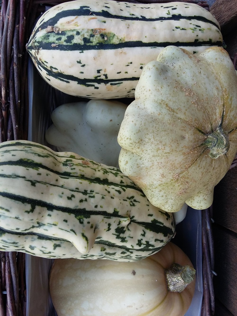 Courges 3€/kg