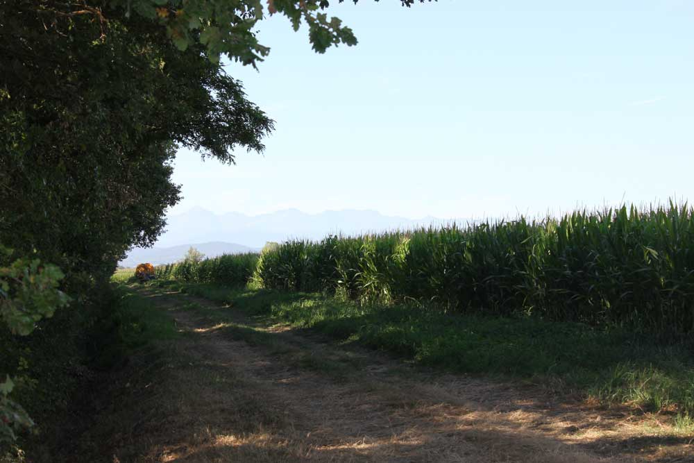 South West France countryside
