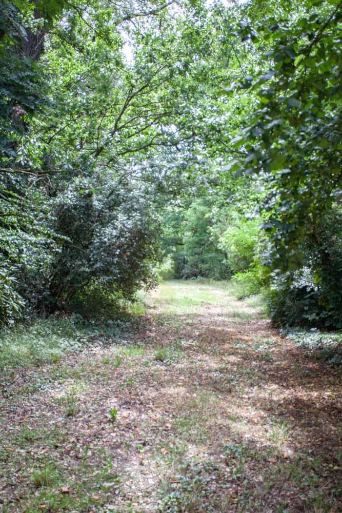 Woodland paths at Chateau JAC
