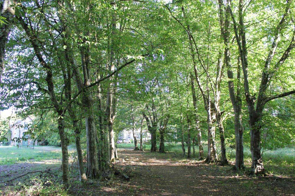 Avenue of trees heading to Chateau JAC