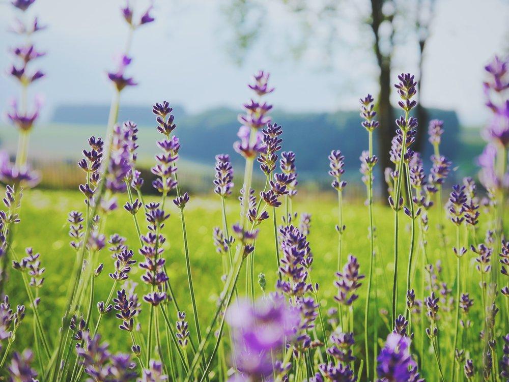 """Düfte aus der Schweiz - Die Düfte unserer nooii-Produkte werden von einer Schweizer Firma kreiert und angemischt. Sie bestehen aus feinen, natürlichen ätherischen Ölen und sind zu 100% von """"Cosmos Naturel"""" zertifiziert."""