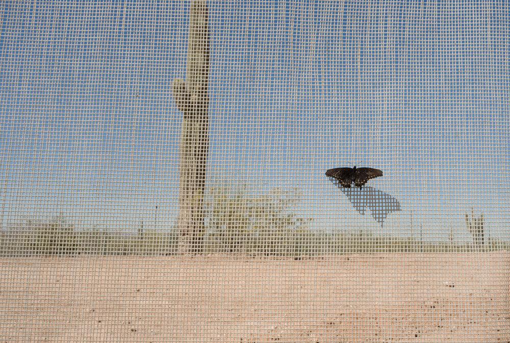 Sands of Time Desert Life-1.jpg