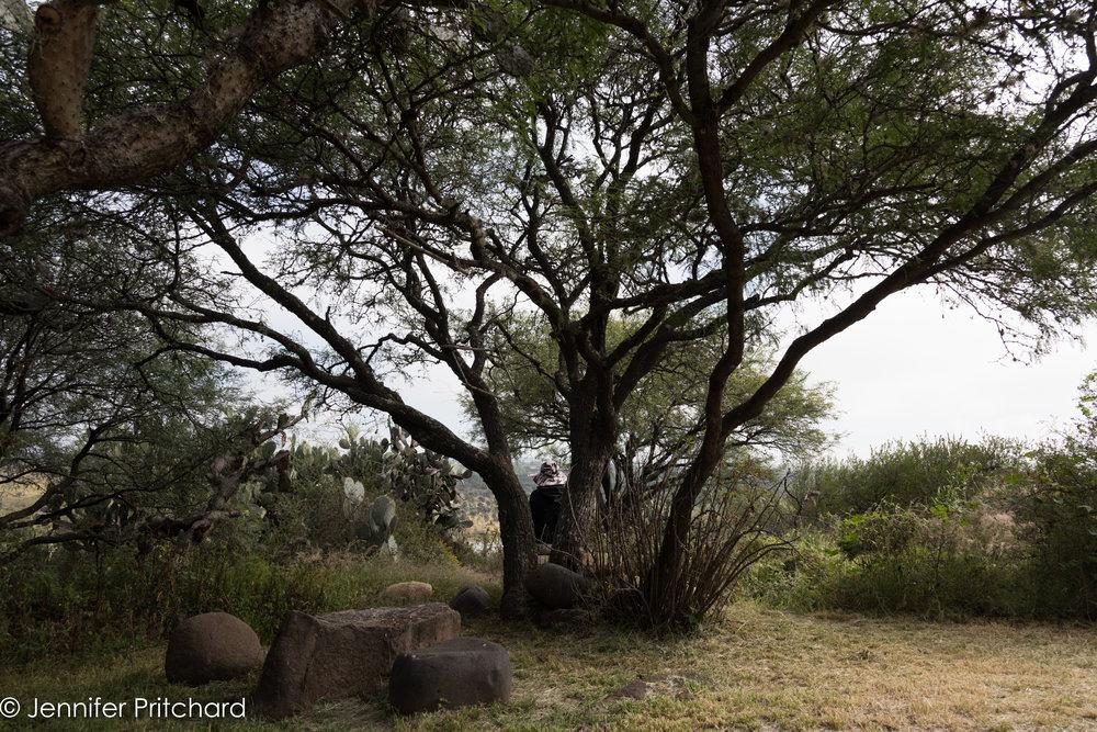 trees-11.jpg