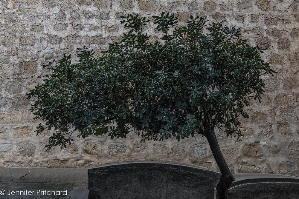 trees-12.jpg
