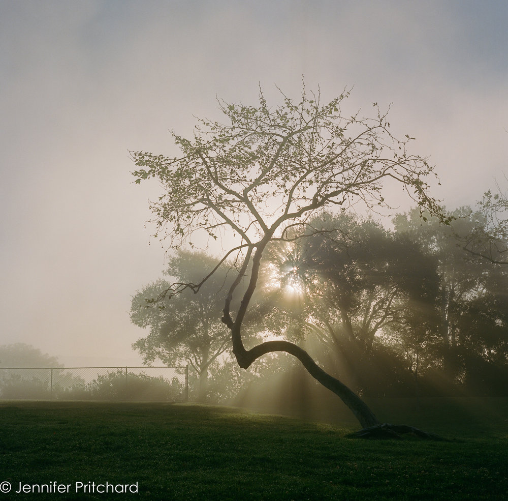 trees-13.jpg