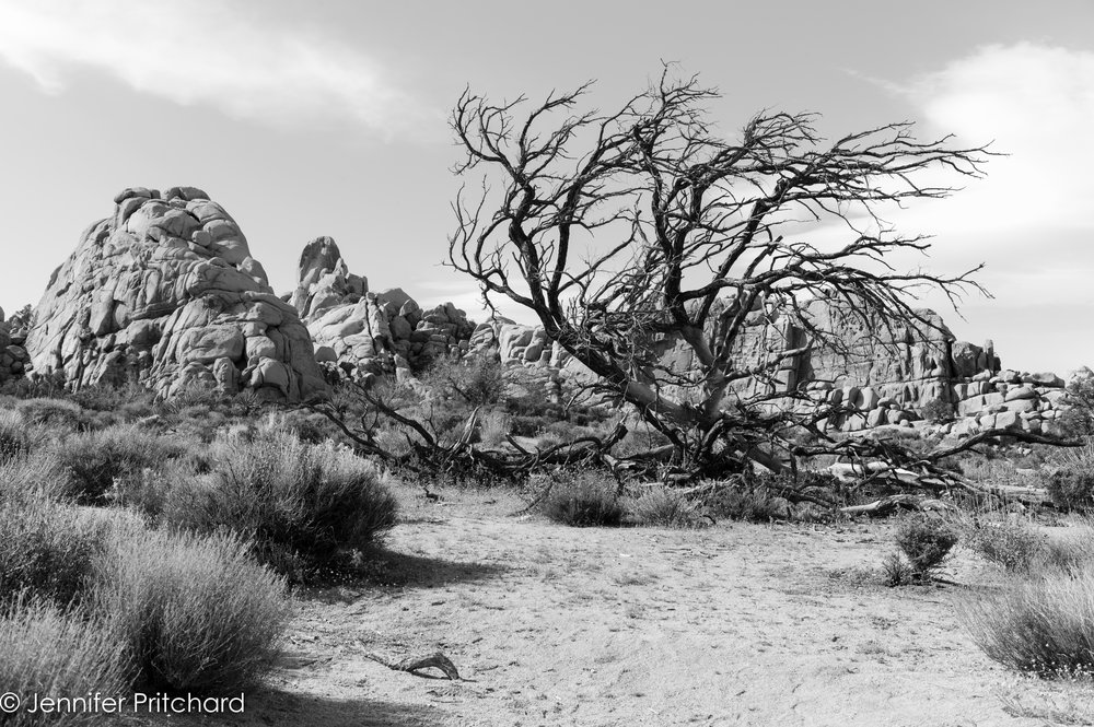 trees-14.jpg