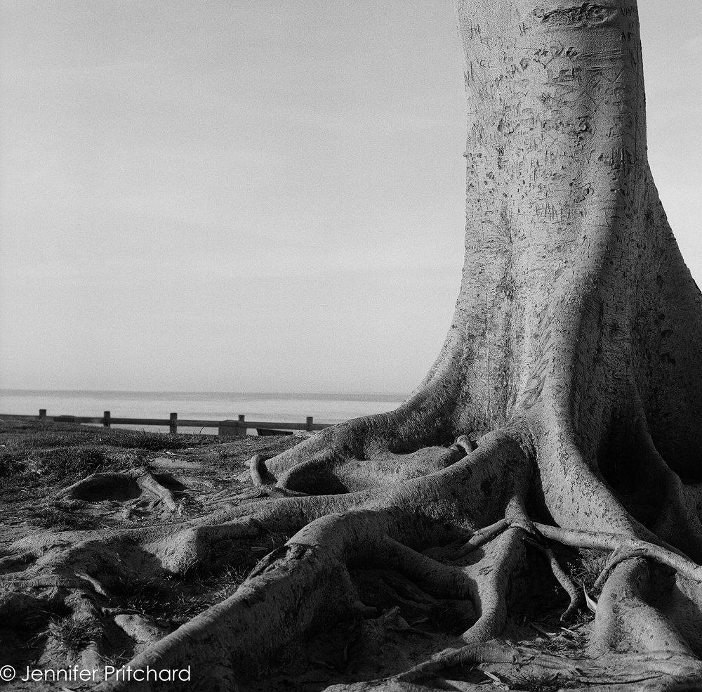 trees-16.jpg