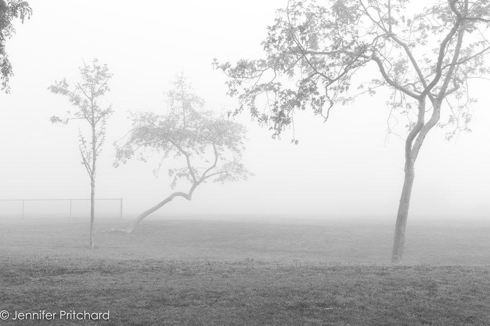 trees-17.jpg
