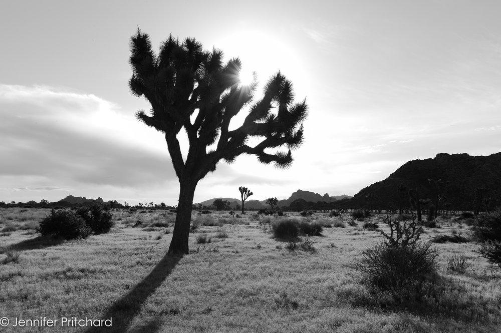 trees-18.jpg