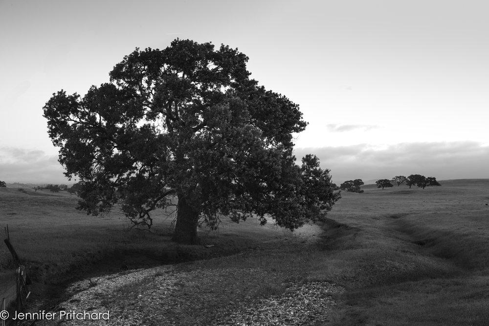 trees-20.jpg