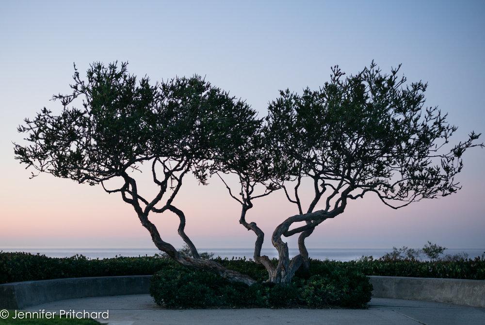 trees-21.jpg