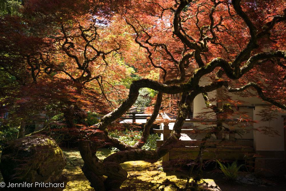 trees-22.jpg