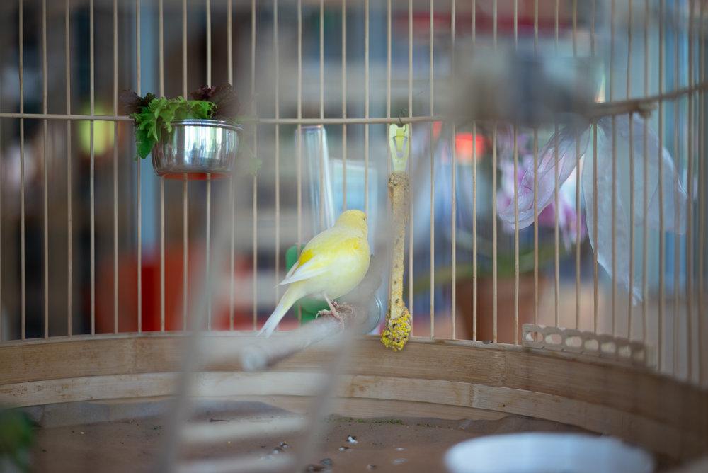canary-2.jpg
