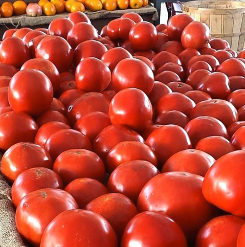 Rosedale Farms -Simsbury, CT - Tomatoes - CSA