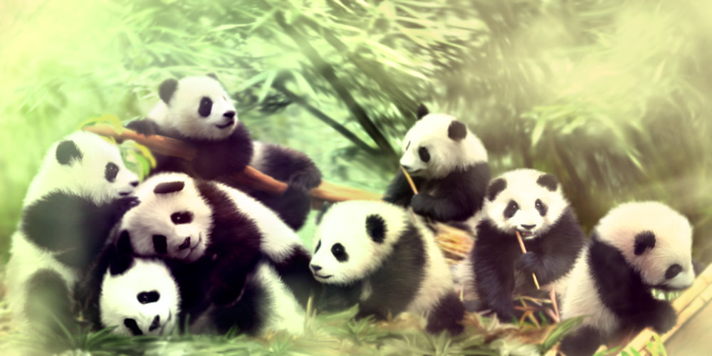 Pandas - prv
