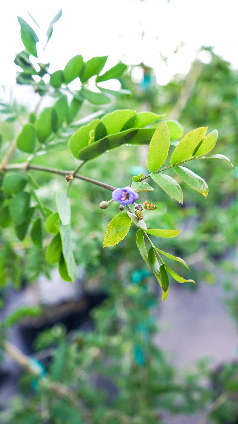 Plant Creations Nursery-50.jpg