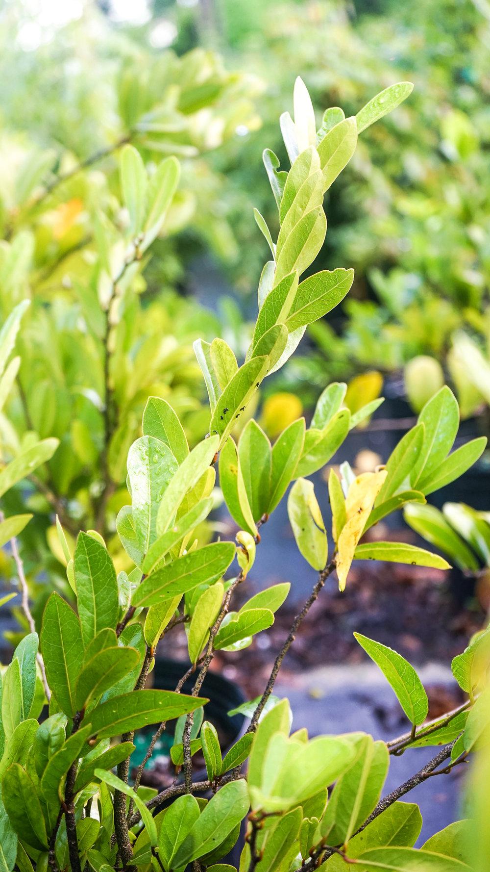 Plant Creations Nursery-63.jpg