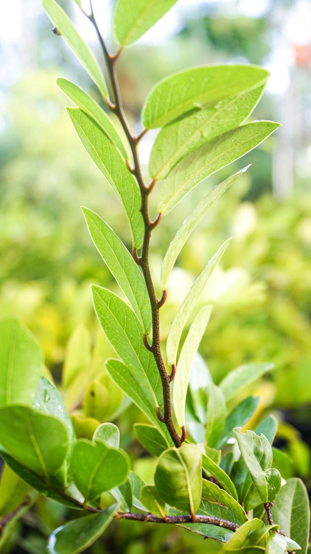 Plant Creations Nursery-64.jpg