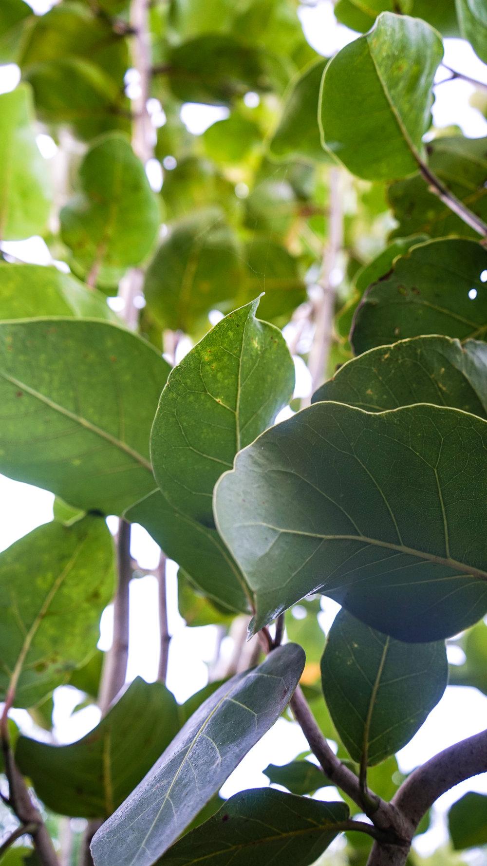 Plant Creations Nursery-7.jpg