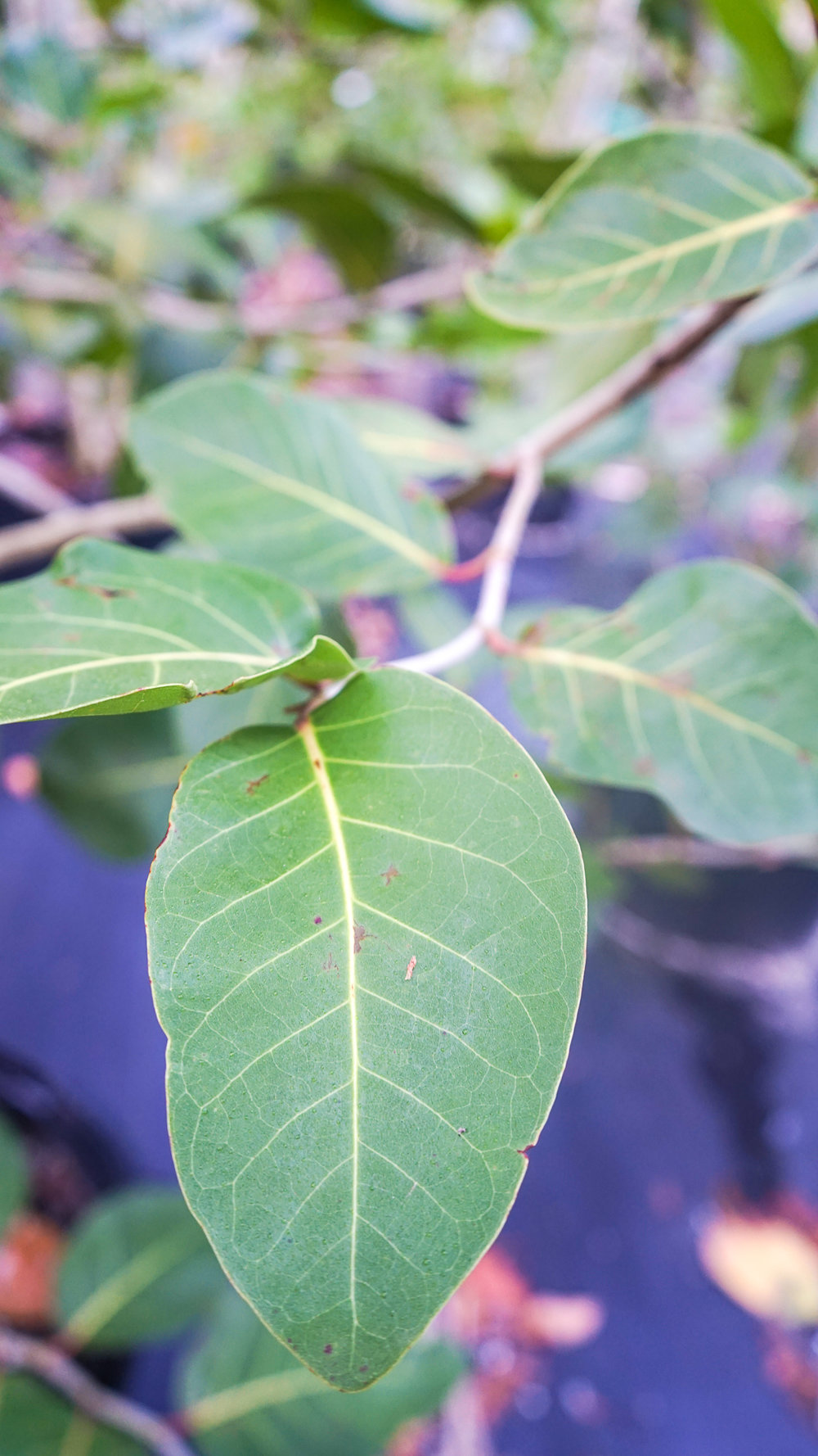 Plant Creations Nursery-6.jpg