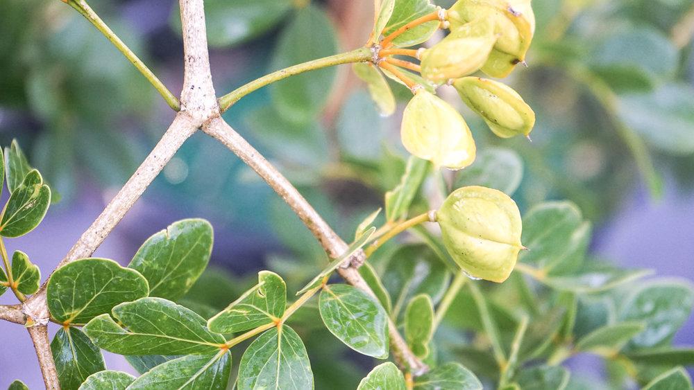 Plant Creations Nursery-20.jpg