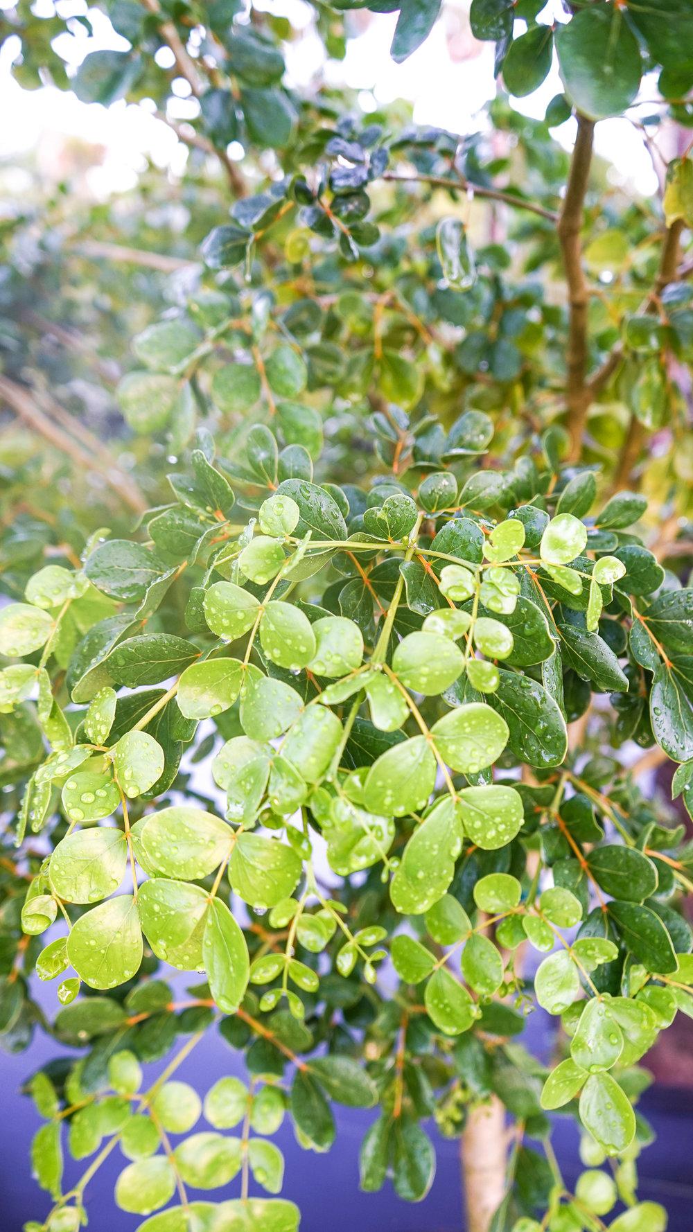 Plant Creations Nursery-10.jpg
