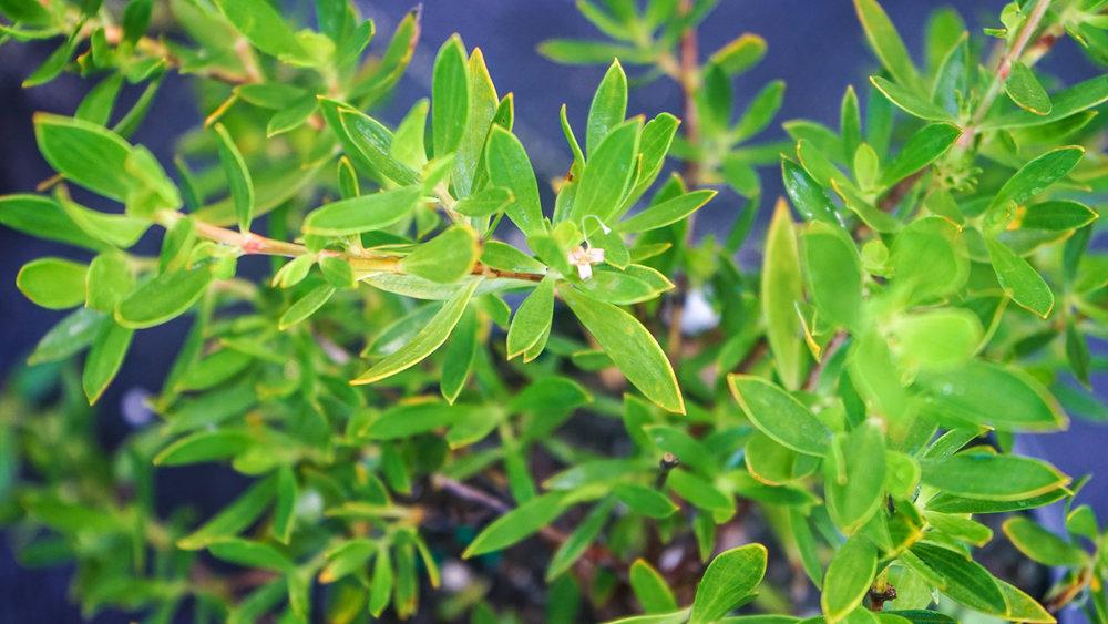 Plant Creations Nursery-68.jpg