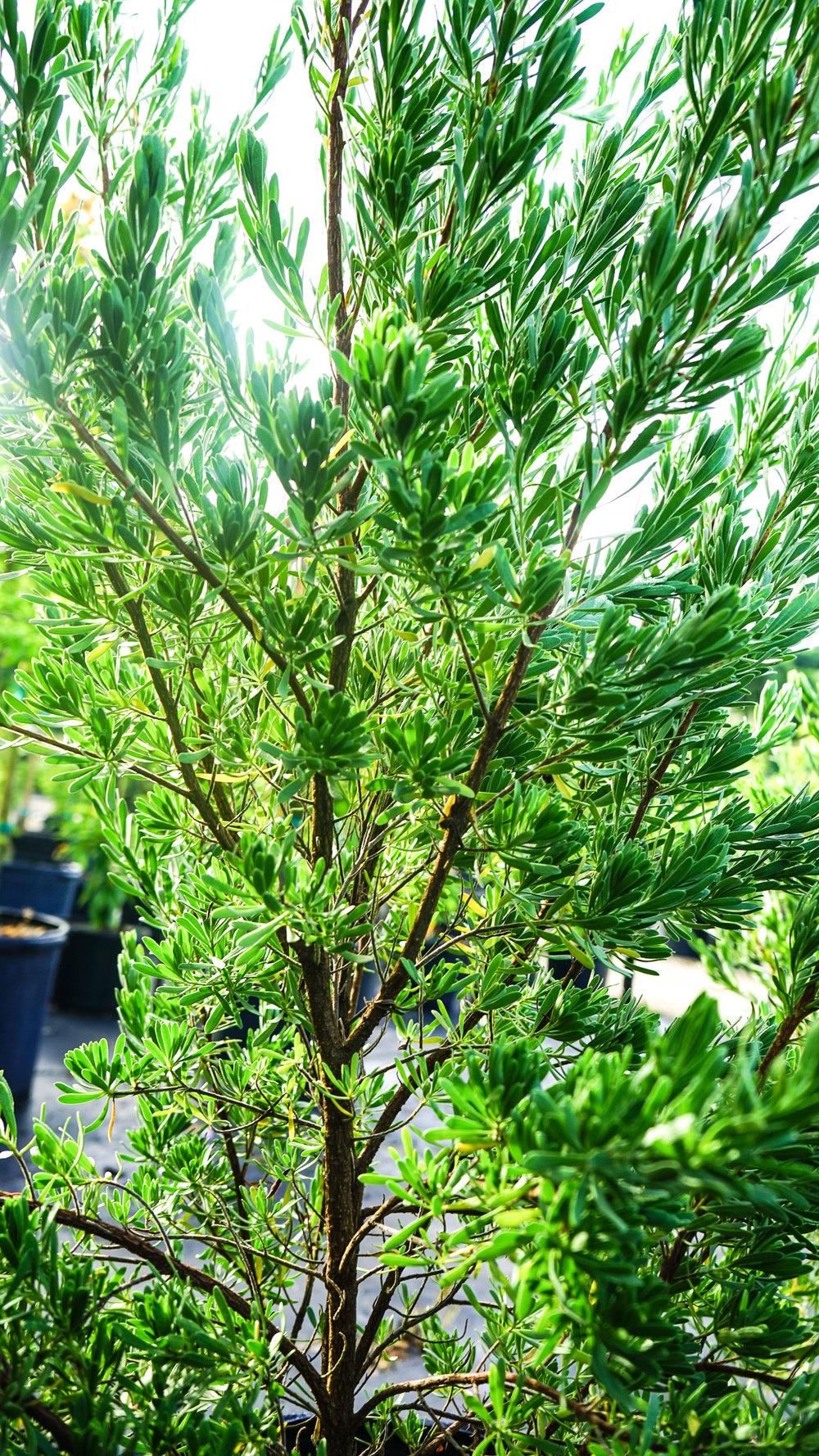 Plant Creations Nursery-72.jpg