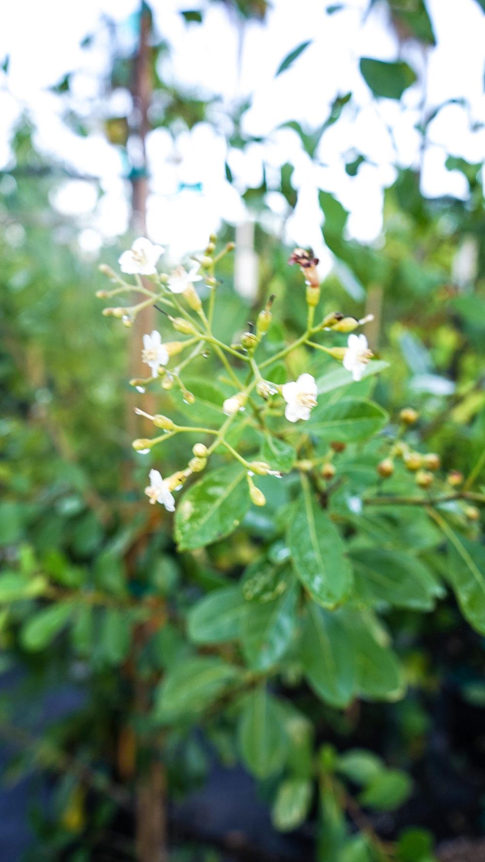 Plant Creations Nursery-37.jpg