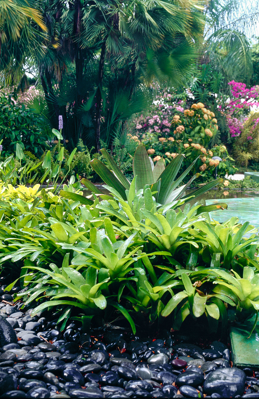 Montifiore Garden Helen Fickling (4).jpg