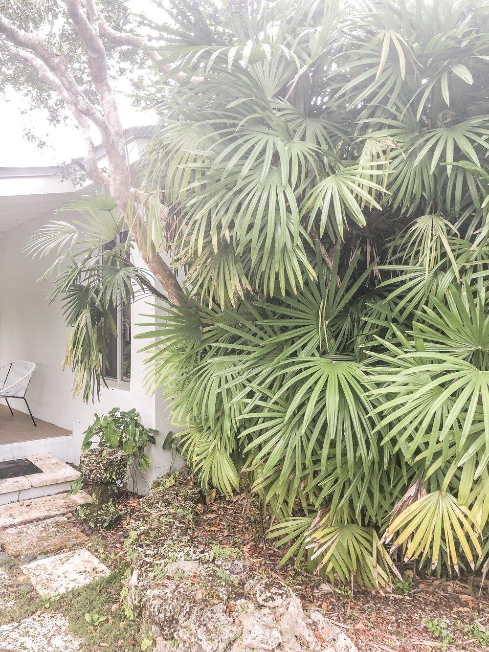 rhapis excelsa Lady Palm Plant Creations Inc 4.jpg
