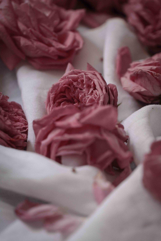 rose_sherbet-25.jpg