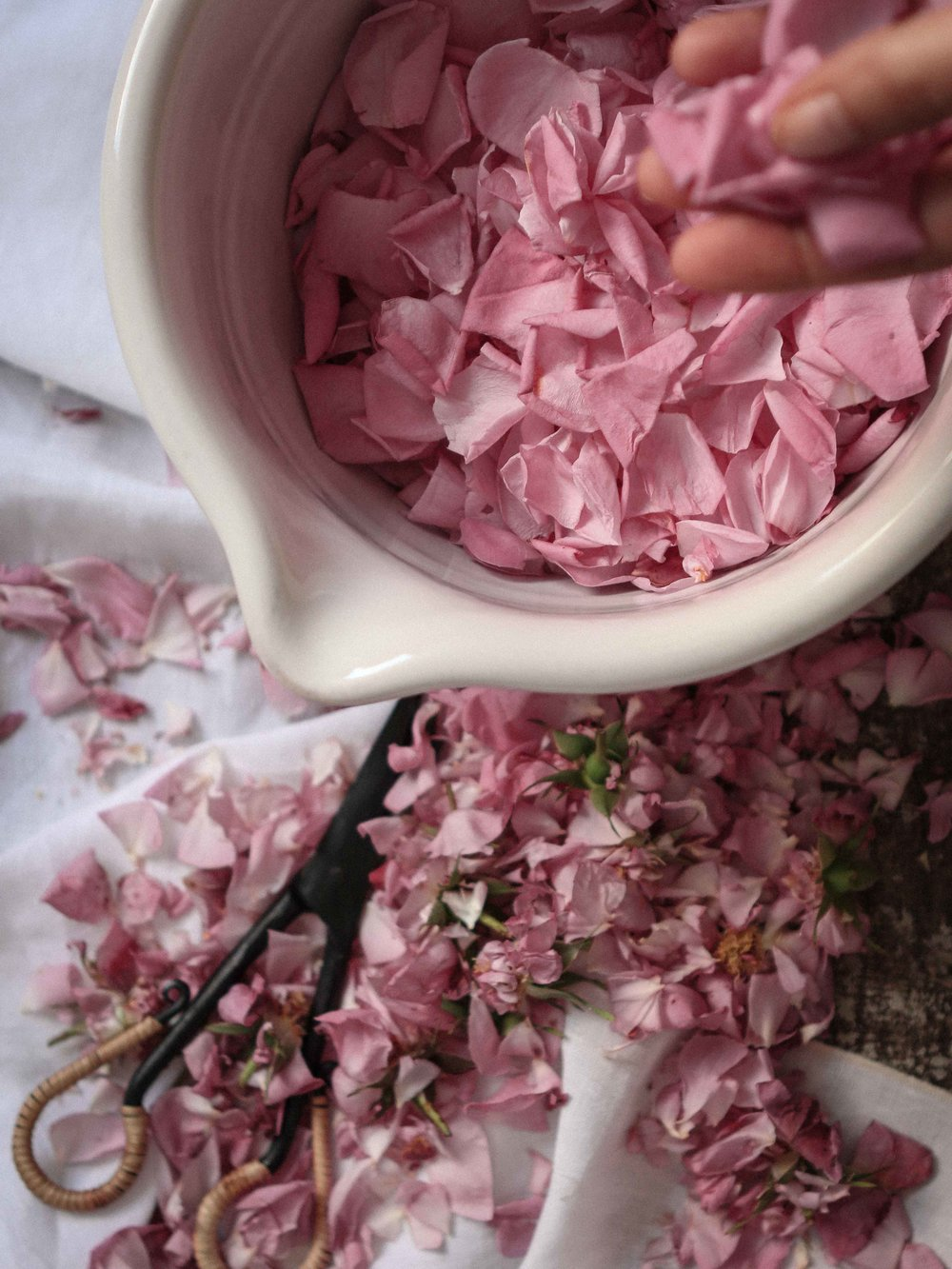 rose_sherbet-52.jpg